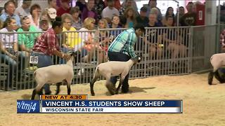 MPS students show sheep at the State Fair - Video