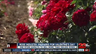 Rose Industry Prepares for Valentines Day