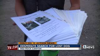 Dog owner goes to great lengths searching for missing pet - Video
