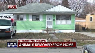Animals removed from home