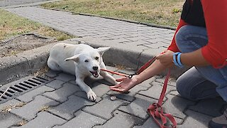 Homeless Dog Keeps Following People On The Street, Trying To Get The Help She Needed