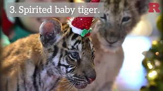 5 Animals That Are Ready For Christmas | Rare Animals - Video