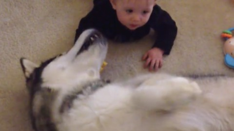 All dog wants is a belly rub, and all baby wants is to crawl