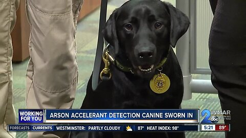 Arson Accelerant Detection canine sworn in