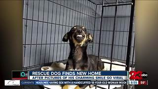 Dog goes viral for smiling in adoption picture, finds forever home - Video