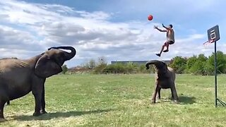 Acrobat performs amazing basketball tricks with elephants