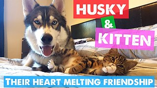 Anxious husky finds companionship in tiny kitten
