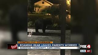 Roaming bear leaves parents worried