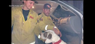 California firefighters rescue a dog in Redding