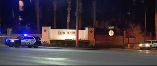 Driver dead after hitting palm tree