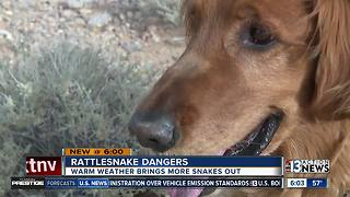 Dog lucky to be alive after rattlesnake bite