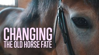 Sparing horses from slaughter - Video