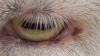 Close-up compilation of various animal eyes - Video