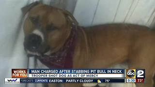 Man charged after stabbing pit bull in neck - Video
