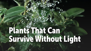 Plants That Can Survive Without Light - Video