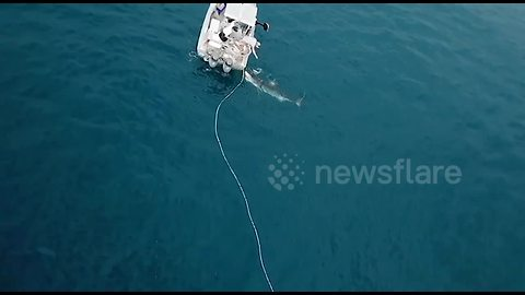 Great white shark tries to attack boat in Australia