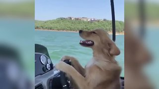 Candid video of Oklahoma dog turns into viral surprise