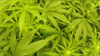 $4 million loan for Ohio Medical Marijuana program approved