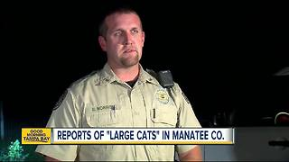 Manatee County Sheriff's Office search for possible 'large cats' in Myakka City - Video