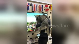 Man creates human roller-coaster for his husky - Video