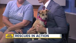Pet of the week: Sassy is a perfect 2-month-old Hound mix puppy for an active family