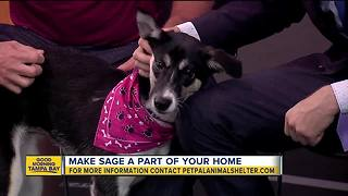 Pet of the week: 7-month-old Sage needs to be adopted by an active family