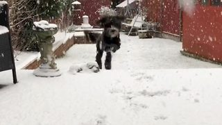Overly-Excited Pooch Frolics In The Snow Like A Happy Child  - Video