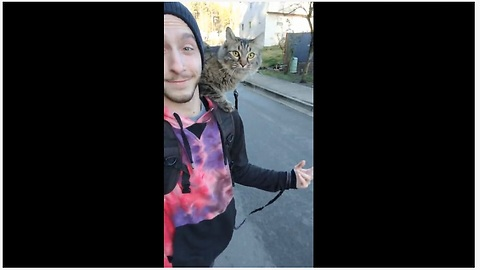 Super unique cat rides skateboard with owner