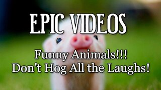 Funny Animals!!! - Don't Hog All the Laughs!