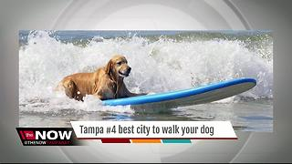 Tampa #4 best city to walk your dog - Video