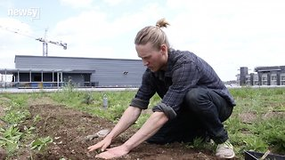 Dream Jobs: Urban Farmer