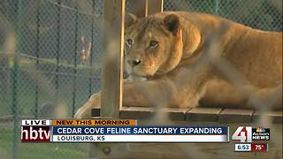 Cedar Cove Feline Conservatory looking to expand - Video