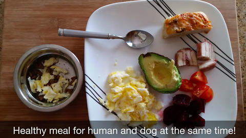 02 Healthy Lunch for Human and Dog