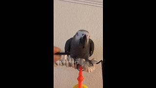 Guilty parrot fully aware she did something bad