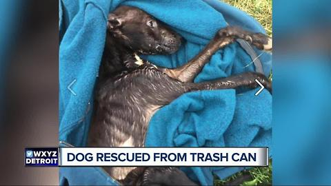 Dog rescued from trash can
