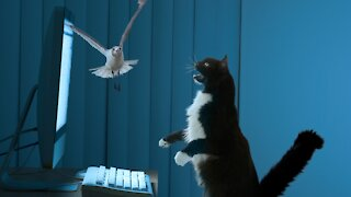 Cat Stalks And Hunts Bird On Laptop Screen