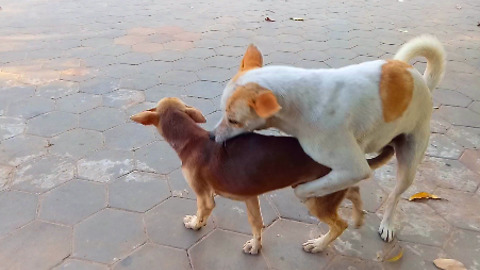 Funny dog ! male dog meet small male dog on the street