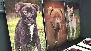 Detroit Dog Rescue gets new home - Video