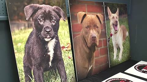 Detroit Dog Rescue gets new home