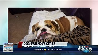 Tucson ranked among best cities for dog owners