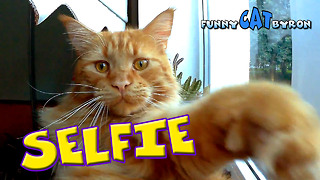 Funny Cat BYRON ❤️ Selfie on the window - Video