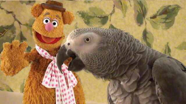 Comedian parrot loves to imitate Fozzie Bear of Muppets fame