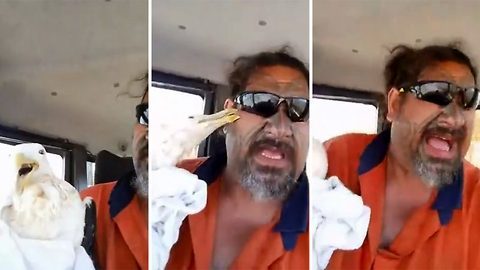 For pecks sake! Sweary New Zealand animal lover shoots to viral fame after attempt to rescue injured seagull goes hilariously wrong