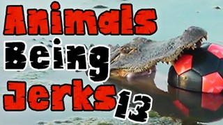 ​Animals Being Jerks #13 - Video