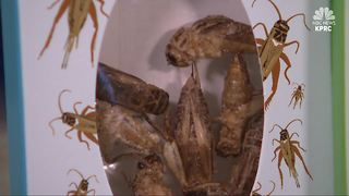 UW Study: Eating crickets may be beneficial than traditional protein sources