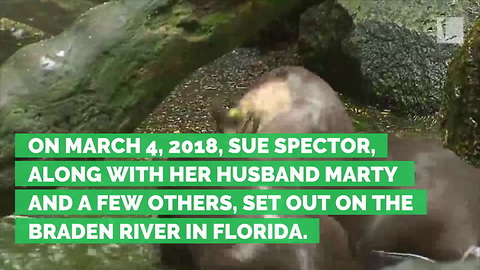 Wild Otter Attacks Age 77 Woman, Bites off Part of Ear