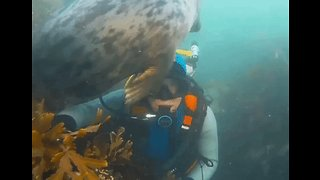 Diver Gets the Ultimate 'Seal' of Approval - Video