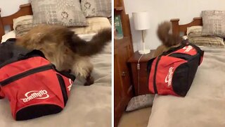 DOZY CAT FALLS OFF BED AFTER PUTTING HEAD IN BAG