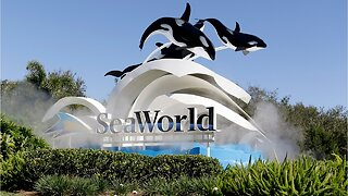Animal welfare activists want dolphin shows to end at SeaWorld