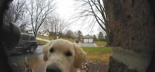 Dog learns to ring doorbell